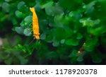sunkist orange shrimp in... | Shutterstock . vector #1178920378