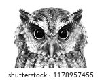 Stock photo photo of an owl in macro photography high resolution photo of owl cub the bureaucratic owl also 1178957455