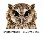 Stock photo photo of an owl in macro photography high resolution photo of owl cub the bureaucratic owl also 1178957458