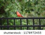 red male northern cardinal bird ... | Shutterstock . vector #1178972455