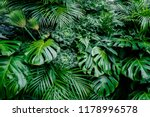 tropical green leaves... | Shutterstock . vector #1178996578
