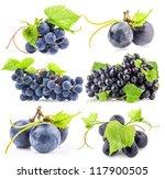 Ripe Dark Grapes Leaves Isolated - Fine Art prints