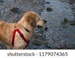 dog in water | Shutterstock . vector #1179074365