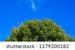 big tree with blue sky | Shutterstock . vector #1179200182
