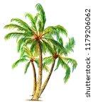 Palm Trees. Three Palm Trees....