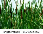 green details of colored plants ...   Shutterstock . vector #1179235252