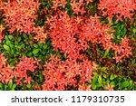 beautiful spike flower blooming ... | Shutterstock . vector #1179310735