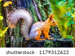 Squirrel in autumn forest scene....