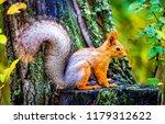Squirrel In Autumn Forest Scene