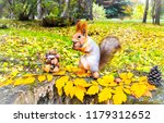 Squirrel In Autumn Park Forest...