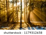 forest trees sunset silhouettes ... | Shutterstock . vector #1179312658