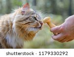fluffy domestic cat sniffing... | Shutterstock . vector #1179330292