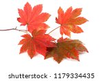 autumn maple leaves | Shutterstock . vector #1179334435