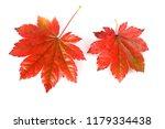 autumn maple leaves | Shutterstock . vector #1179334438