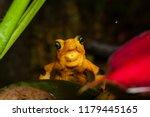 critically endangered... | Shutterstock . vector #1179445165