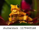 critically endangered... | Shutterstock . vector #1179445168