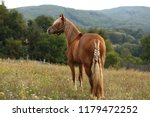 brown horse standing on pasture ... | Shutterstock . vector #1179472252