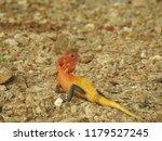reddish yellowish lizard ... | Shutterstock . vector #1179527245