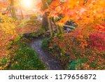 autumn foliage mountain forest...