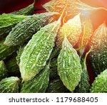 bitter gourd background   green ... | Shutterstock . vector #1179688405