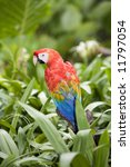 beautiful parrot | Shutterstock . vector #11797054