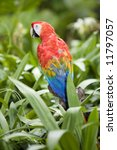 beautiful parrot   Shutterstock . vector #11797057