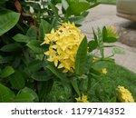 spike flowers or red flowers in ... | Shutterstock . vector #1179714352