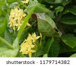 spike flowers or red flowers in ... | Shutterstock . vector #1179714382