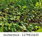 green grass. natural background. | Shutterstock . vector #1179812635