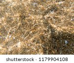 seabed  underwater photography  | Shutterstock . vector #1179904108