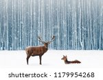 Family Of Noble Deer In A Snow...