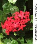 beautiful spike flower blooming ... | Shutterstock . vector #1179994642