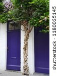 Wisteria Growing Over Puprle...