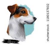 Jack Russell Terrier  Jack...
