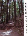 woods near mexico city | Shutterstock . vector #1180209898