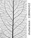 background texture leaf. vector ... | Shutterstock .eps vector #1180461412