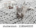 Stock photo breakfast in bed grey cute cat lying on bed with breakfast coffee cups on background 1180640335