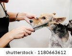 groomer takes care of the dog's ... | Shutterstock . vector #1180663612