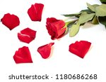 Stock photo rose and rose petals on white background 1180686268