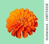 bright orange nasturtium flower ... | Shutterstock . vector #1180723318