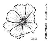 decorative cosmos flowers ... | Shutterstock .eps vector #1180813672