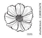 decorative cosmos flowers ... | Shutterstock .eps vector #1180813678
