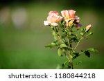 flowers background. amazing... | Shutterstock . vector #1180844218