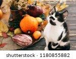 Cute Cat Sitting At Beautiful...