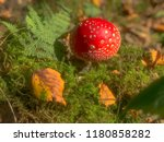Autumn Fairytail Forest