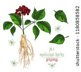 realistic botanical color...   Shutterstock .eps vector #1180858582