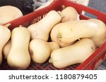 yellow squashes in the market | Shutterstock . vector #1180879405