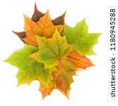 colorful autumn maple leaf... | Shutterstock . vector #1180945288
