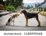friendship between two dogs on... | Shutterstock . vector #1180990468