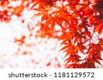 autumn landscape. autumn tree... | Shutterstock . vector #1181129572